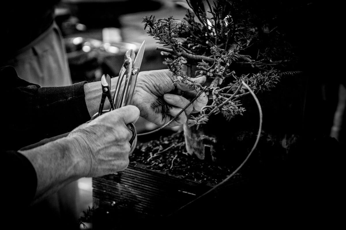 TAKUMI lifestyle - Kunio Kobayashi - quando si diventa dei bravi bonsaisti 2