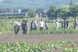 【画像】野菜の露地圃場にも参観者多く訪れました