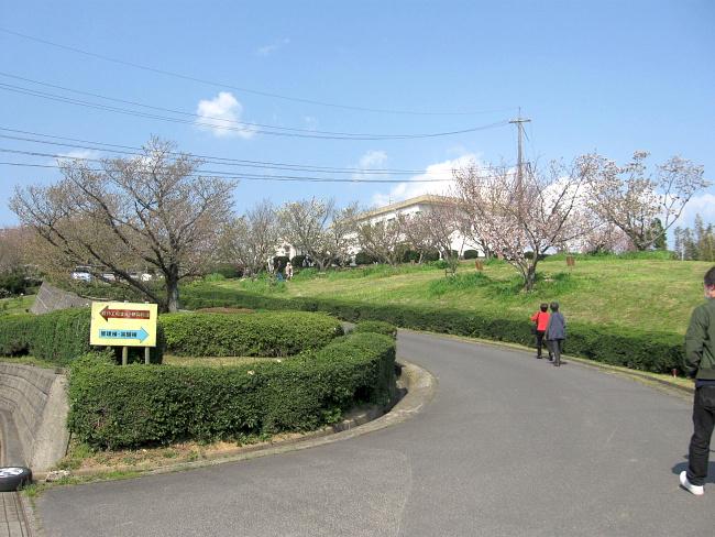 【画像】島根大学本庄農場サクラ展示圃場