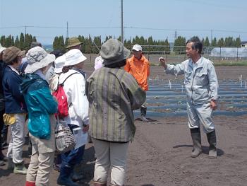 ラッカセイ圃場で、今年は降雨が少ないが発芽していることを確認