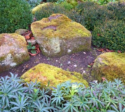 How to Plant a Low Maintenance Rock Garden