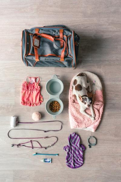 Accessories That You'll Need for Your New Dog