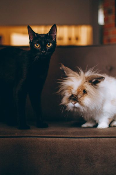 How to Keep Your Pets Out of Certain Areas in Your Home