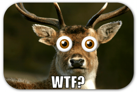 wtf-_-deer-in-headlights-meme