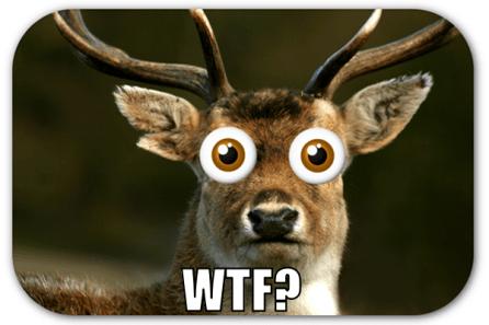 wtf-_-deer-in-headlights-meme