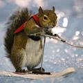 Ski Squirrel.jpg