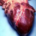 heartbecel.jpg