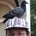 pigeon.edited.jpg