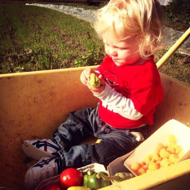 Dexter op de zelfplukboerderij.