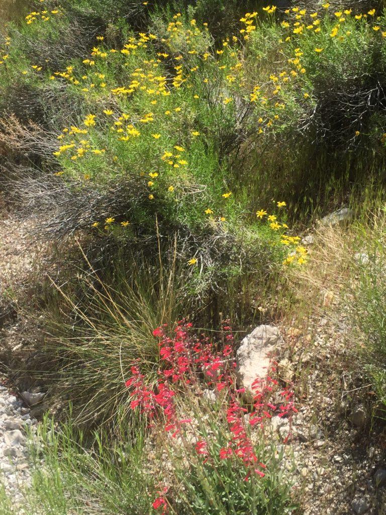 Calico Basin, La Madre Mountains, RRNCA, Red Rock, Las Vegas, Nevada