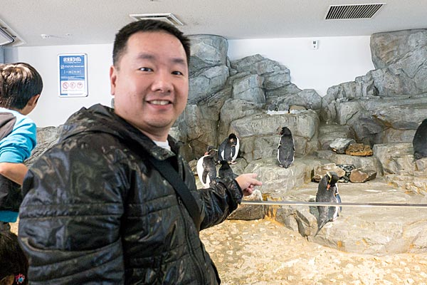 Kaiyukan Aquarium Osaka Penguins