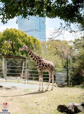 Tennoji Zoo Giraffe