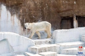 Tennoji Zoo Polar Bear