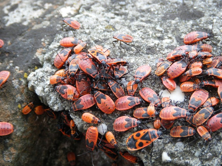 insects-1185615_960_720