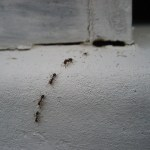 Top Signs That You Have A Pest Infestation In Your Home (And What To Do About It!)