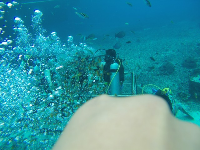 Greeting divers while snorkeling