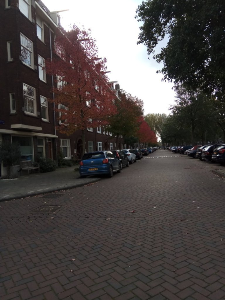 autumn in Amsterdam red leaves