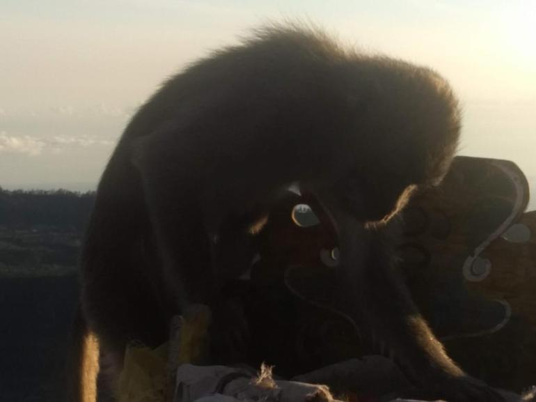 Monkey going through the offering altar