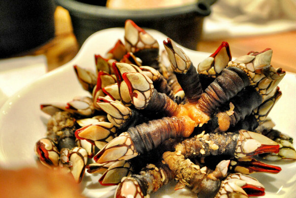 Risultati immagini per percebes frutos mar