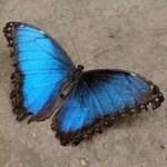 Feeling the butterflies? Let's boost your confidenc - (image: Unsplash @ munich0307)