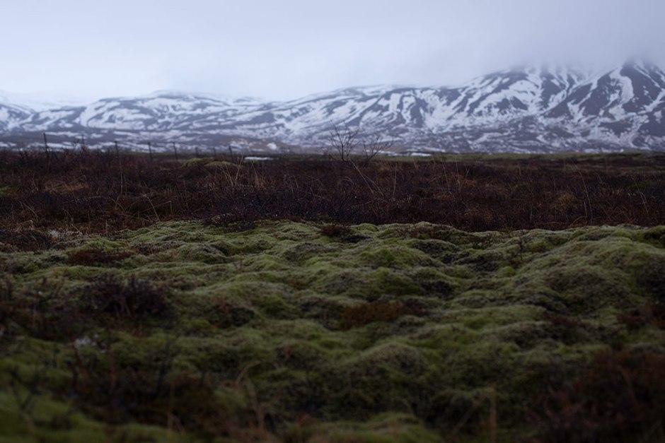 Island_Pingvellir (12)