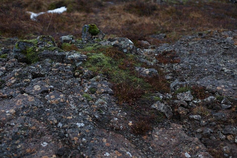 Island_Pingvellir (7)