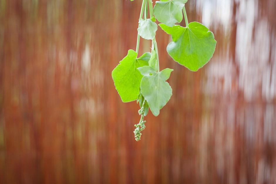 kräuter selber pflanzen (4)