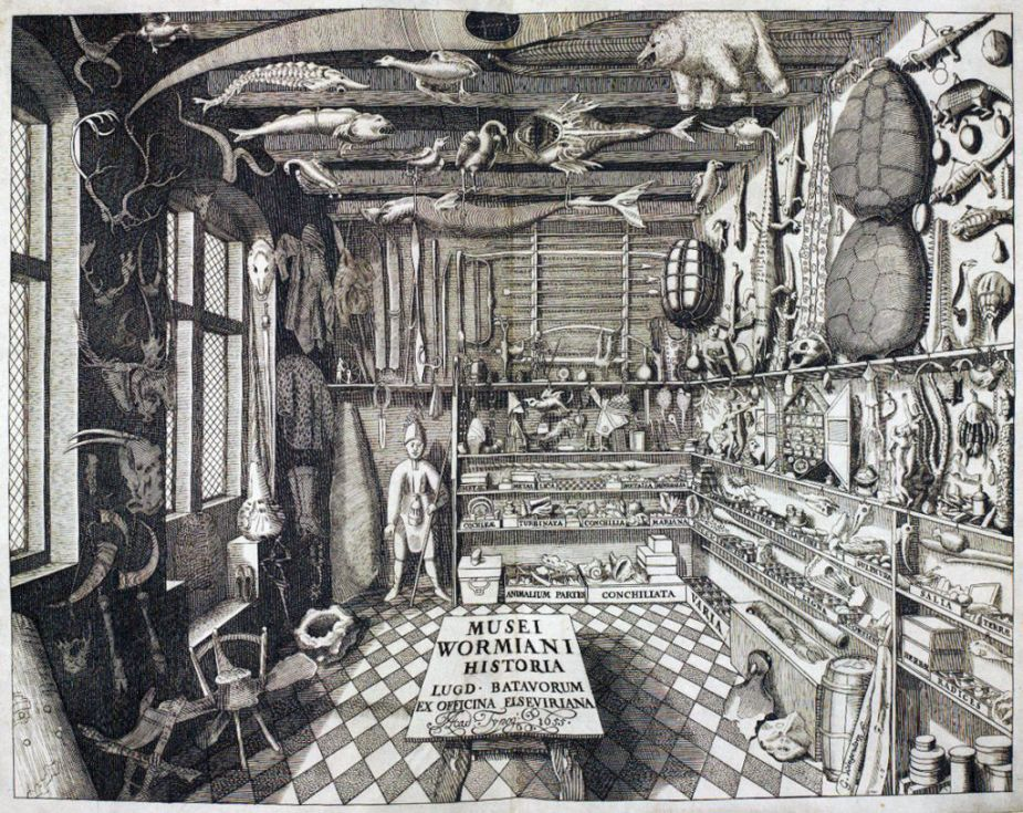 Make Your Own Cabinet of Curiosities