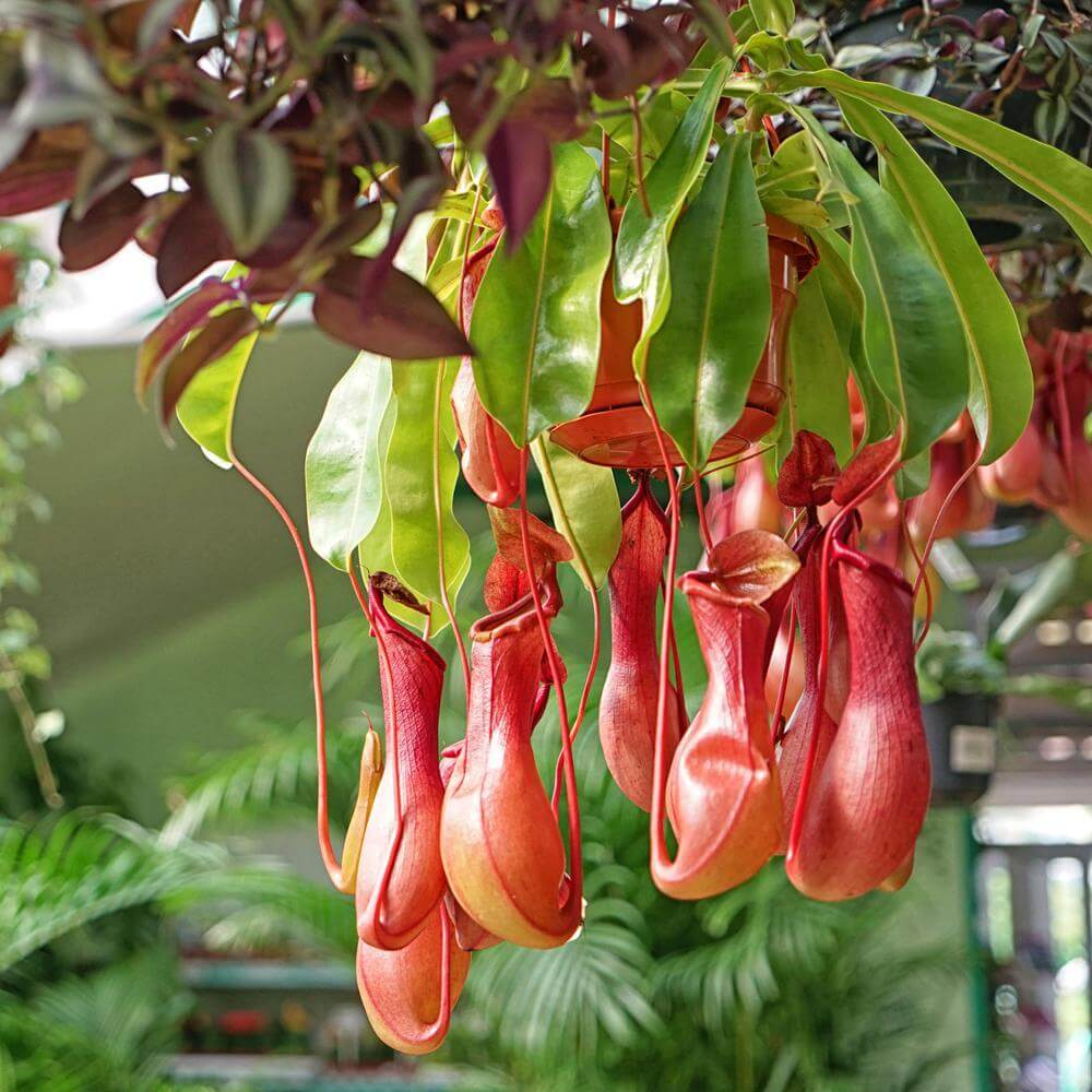 9 Plants That Keep Bugs Away - Talk District