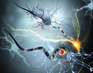 neurons37591849