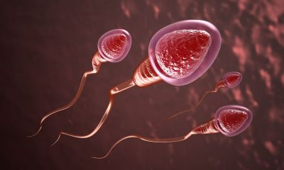 sperm, male fertility evaluation