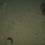cave-emty-shells