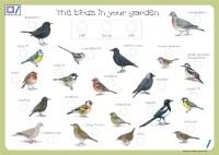 Garden Birds | TalkingPEN UK