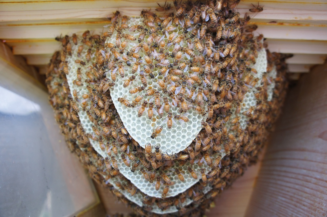 Top Bar Hives - Review Of The Pros & Cons Of Top Bar Hives ...
