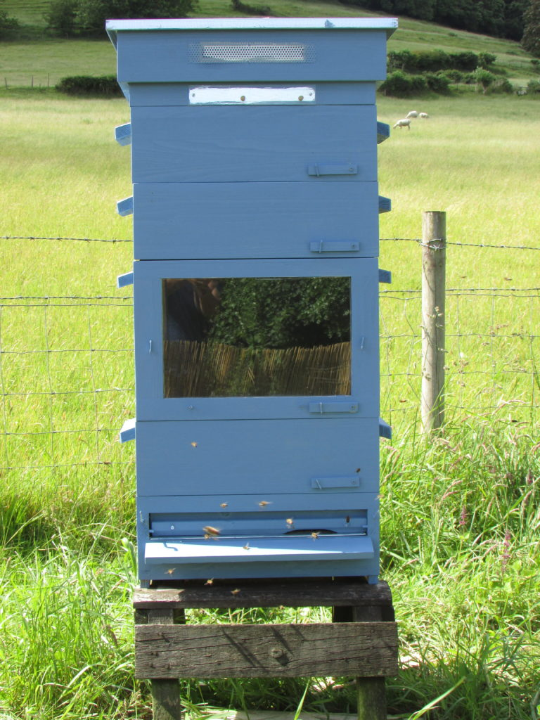Thermosolar Hive (Blue) With Bees