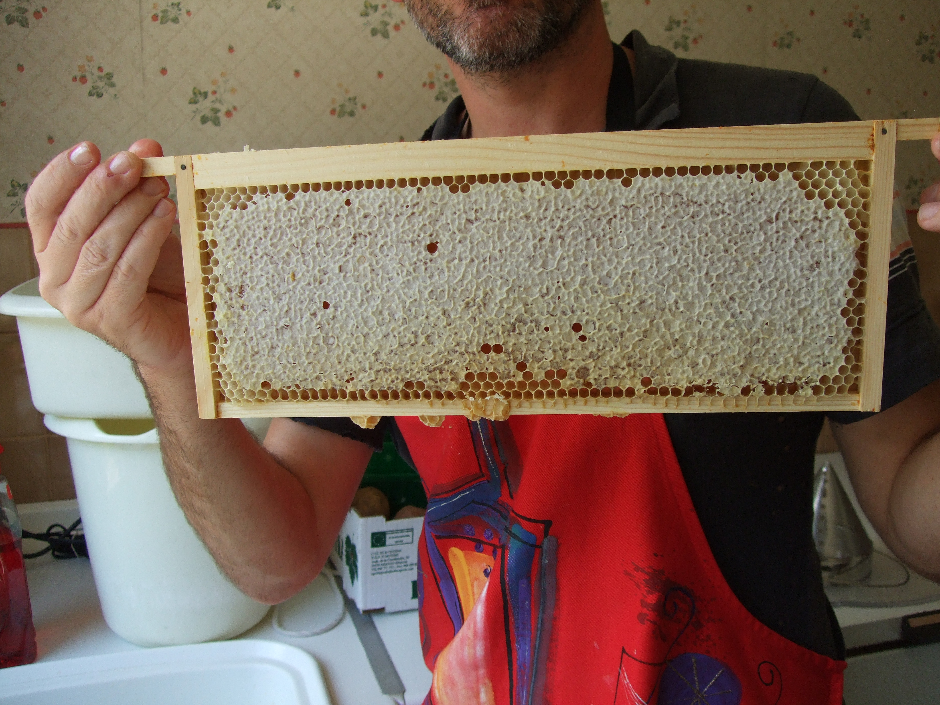 Inspecting and Understanding the Brood Pattern - PerfectBee