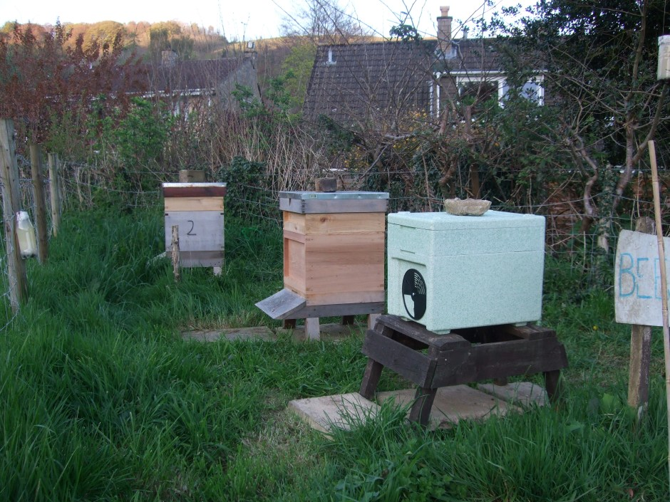 Two Hives Plus Nuc