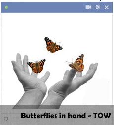 Butterflies in Hand