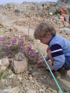 Little boy examining alpine plants