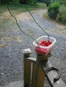 ingenious berry basket