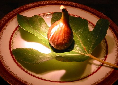 Violetta Fig and Leaf