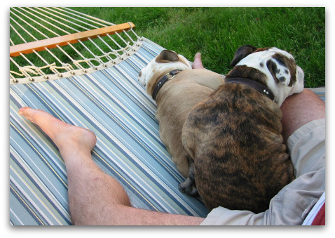 boz and gracie take over the hammock