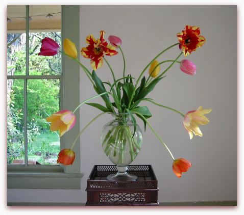 French and parrot tulips in a glass vase