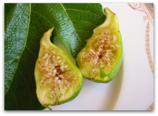 Peter's Honey Fig with fig leaf
