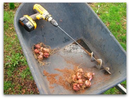 Lirios de agua - el cavador de la charca