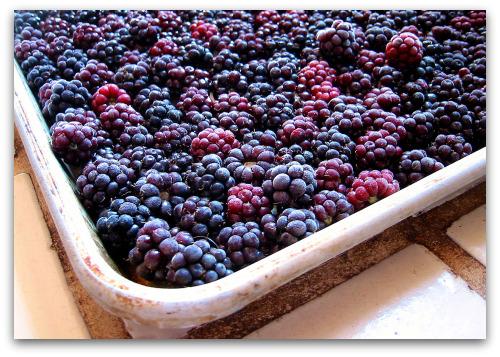 frozen berries on baking sheet