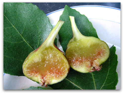 sliced Vern's Brown Turkey Fig
