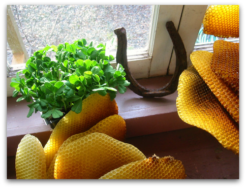 pea starts, honeycomb and a horseshoe