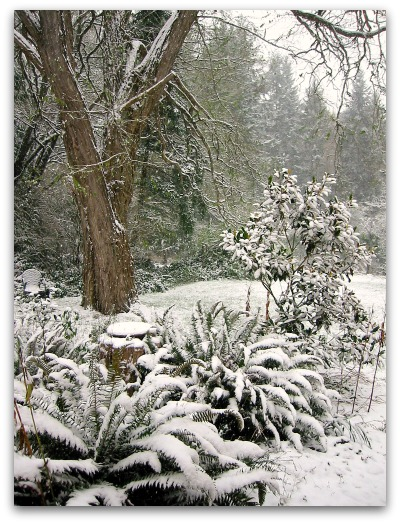 snow covered ferns and magnolia and locust trees