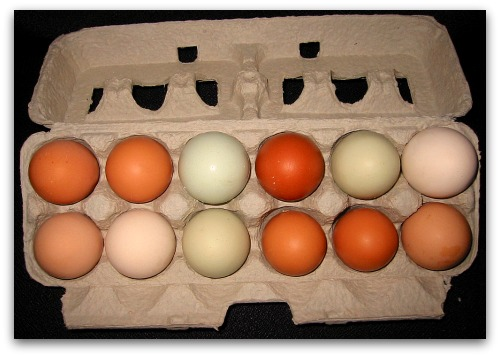 brown, blue, tan, buff eggs in a carton